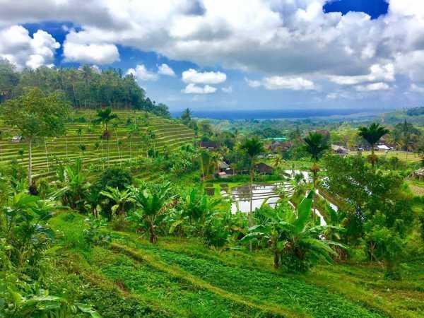 Rice Fields around Tirtagangga Palace img credit : FB Tirtagangga Hotel & Restaurant