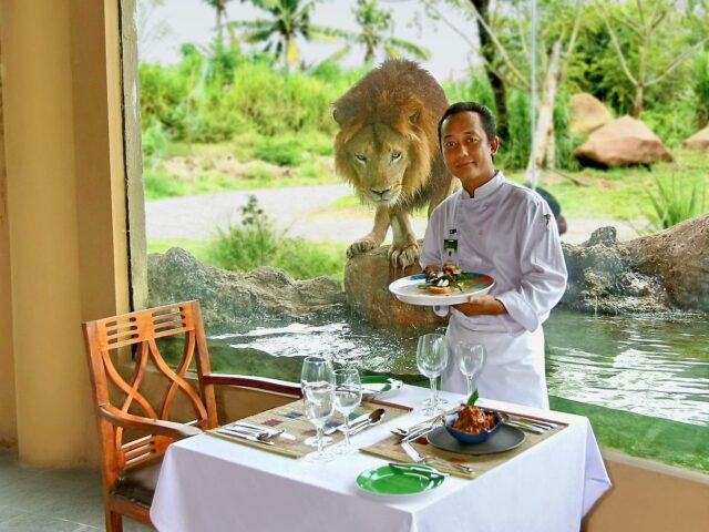 Lunch with a lion activity at Bali Safari Marine Park