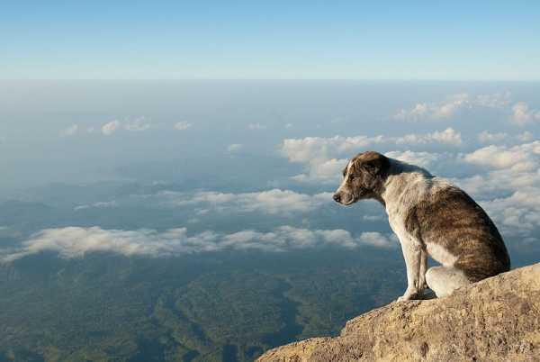A dog in Mount Agung