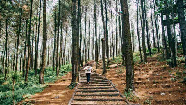 Imogiri Pine Forest Yogyakarta