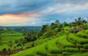 Jatiluwih Rice Terrace View