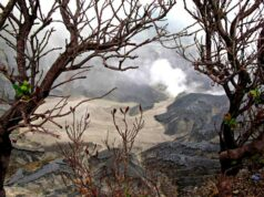 Tangkuban Parahu and The Death Trees