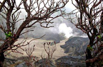 Tangkuban Parahu and The Death Trees