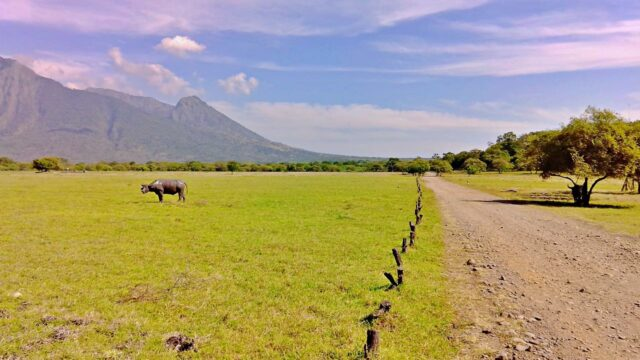 Baluran National Park Savanna
