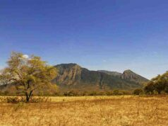 Baluran National Park, The Savanna