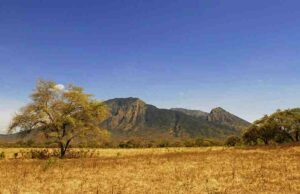 Baluran National Park, The Savanna