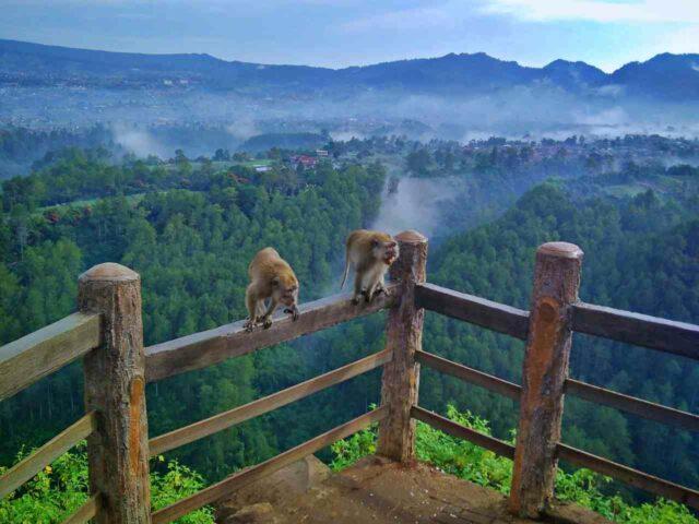 monkeys at keraton cliff