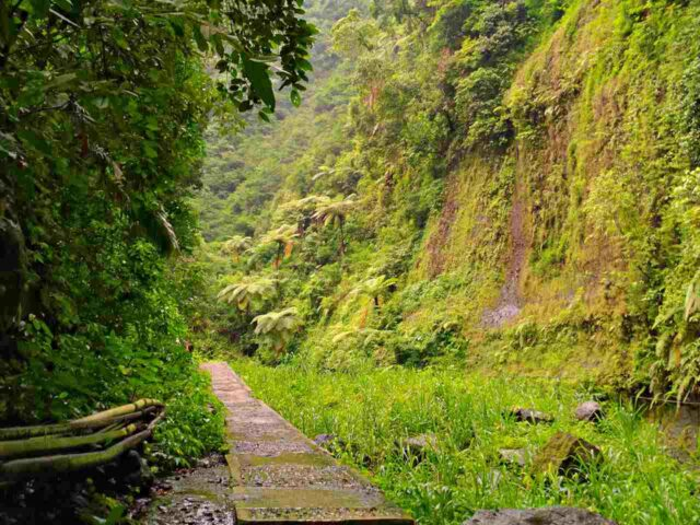 trail to madakaripura waterfall