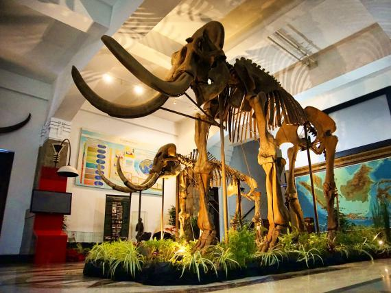 Image result for museum geologi