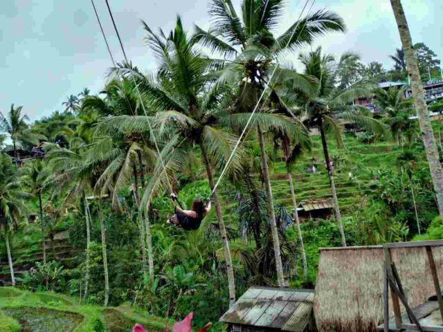 swing attraction in tegalalang
