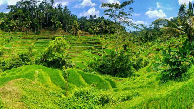 tegalalang landscape