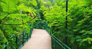 Forest Walk Babakan Siliwangi Bandung