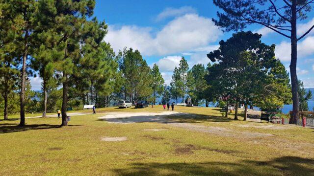 Sipinsur pine forest