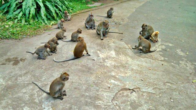monkeys in coban forest