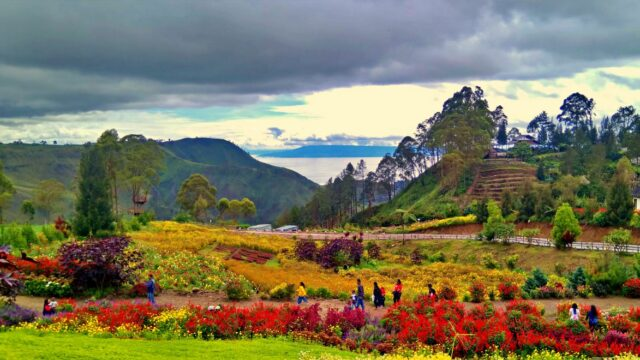Sapo Juma Flower Garden