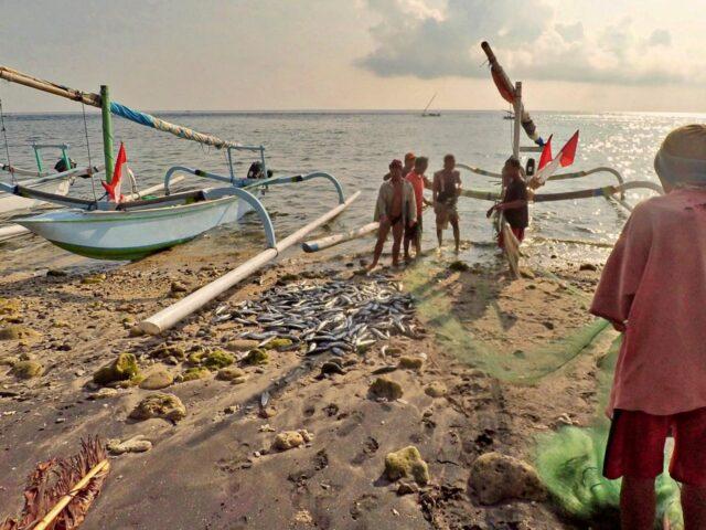 Amed Fisherman