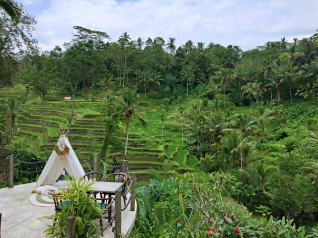 cafe in tegalalang rice terrace