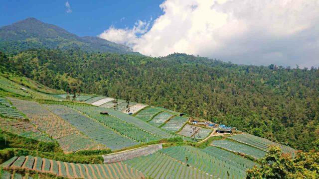 cetho temple, plantation landscape
